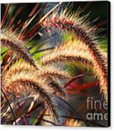Grass Ears Canvas Print by Elena Elisseeva