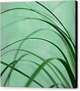 Grass Impression Canvas Print by Hannes Cmarits