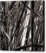 Grasses 2 Canvas Print by Colleen Cannon