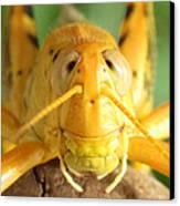 Grasshopper Grin Canvas Print