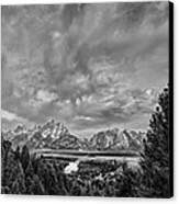 Gray Treetons Canvas Print