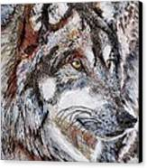 Gray Wolf Watches And Waits Canvas Print by J McCombie