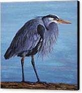 Great Blue Heron Canvas Print by Crista Forest
