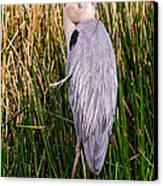 Great Blue Heron Canvas Print by Edward Fielding