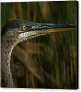 Great Blue Profile Canvas Print by Ernie Echols