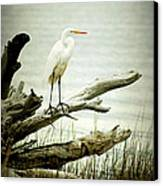 Great Egret On A Fallen Tree Canvas Print by Joan McCool
