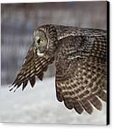 Great Grey Owl In Flight Canvas Print by Jakub Sisak