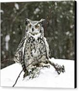Great Horned Owl In A Winter Snow Storm Canvas Print