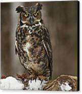 Great Horned Owl Watching You Canvas Print by Inspired Nature Photography Fine Art Photography