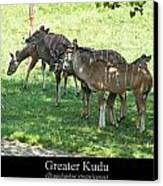 Greater Kudu Canvas Print