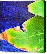 Green And Blue  Canvas Print by Bobby Mandal