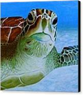 Green Back Turtle Canvas Print by David Hawkes