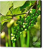 Green Berries Canvas Print by Kaye Menner