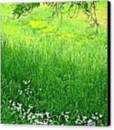 Green Canvas Print by Beverly Hammond