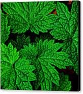 Green Burst Canvas Print by James Hammen