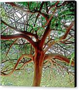 Green Canopy Canvas Print by Terry Reynoldson