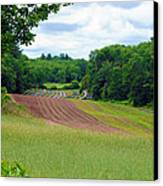 Green Crops Canvas Print by Kenneth Feliciano