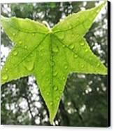 Green Droplets Canvas Print