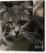 Green Eyed Kitty Cat Canvas Print