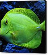 Green Fish Canvas Print by Wendy J St Christopher