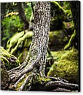 Green Forest Canvas Print by Aaron Aldrich