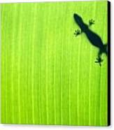 Green Gecko Leaf Canvas Print