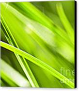 Green Grass Abstract Canvas Print by Elena Elisseeva