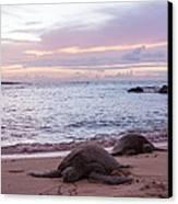 Green Hawaiian Sea Turtles At Sunset - Oahu Hawaii Canvas Print by Brian Harig