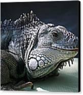Green Iguana 1 Canvas Print