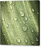 Green Leaf With Raindrops Canvas Print
