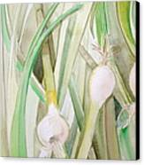 Green Onions Canvas Print by Debi Starr