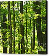 Green Spring Forest Canvas Print