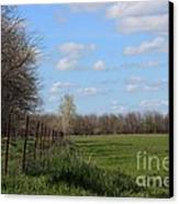 Green Wheat Field With Blue Sky Canvas Print
