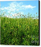 Greens Canvas Print by Boon Mee