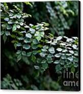 Greens Canvas Print by Dan Holm