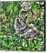 Grey Wolf Dreaming Canvas Print