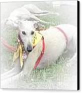 Greyhound Rescue 7 Canvas Print by Jackie Bodnar