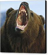 Grizzly Bear Close Up Of Growling Face Canvas Print