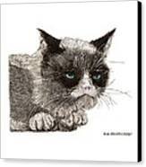 Grumpy Pussy Cat Canvas Print by Jack Pumphrey