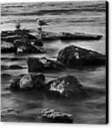 Gull Rock Canvas Print
