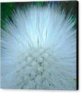 Hairy Plant Canvas Print
