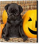 Halloween Pug Canvas Print by Greg Cuddiford