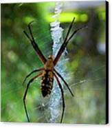 Halloween Spider Canvas Print