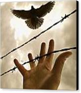 Hand Reaching Out For Bird Canvas Print