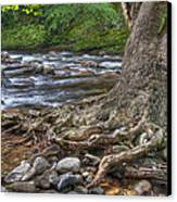Hanging In There Canvas Print by Wendell Thompson