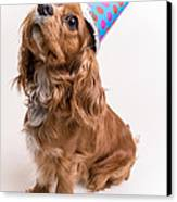 Happy Birthday Dog Canvas Print by Edward Fielding