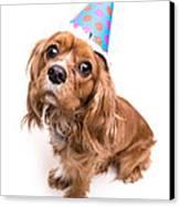 Happy Birthday Puppy Canvas Print by Edward Fielding