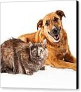 Happy Yellow Dog And Persian Cat Canvas Print by Susan Schmitz