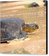 Hawaiian Green Sea Turtle 2 Canvas Print