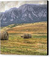 Hay There Canvas Print by Juli Scalzi